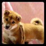 shibainuF5242016#2